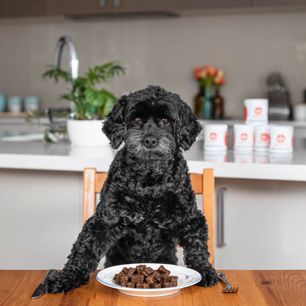 dog sitting at kitchen breakfast table with chews on plate