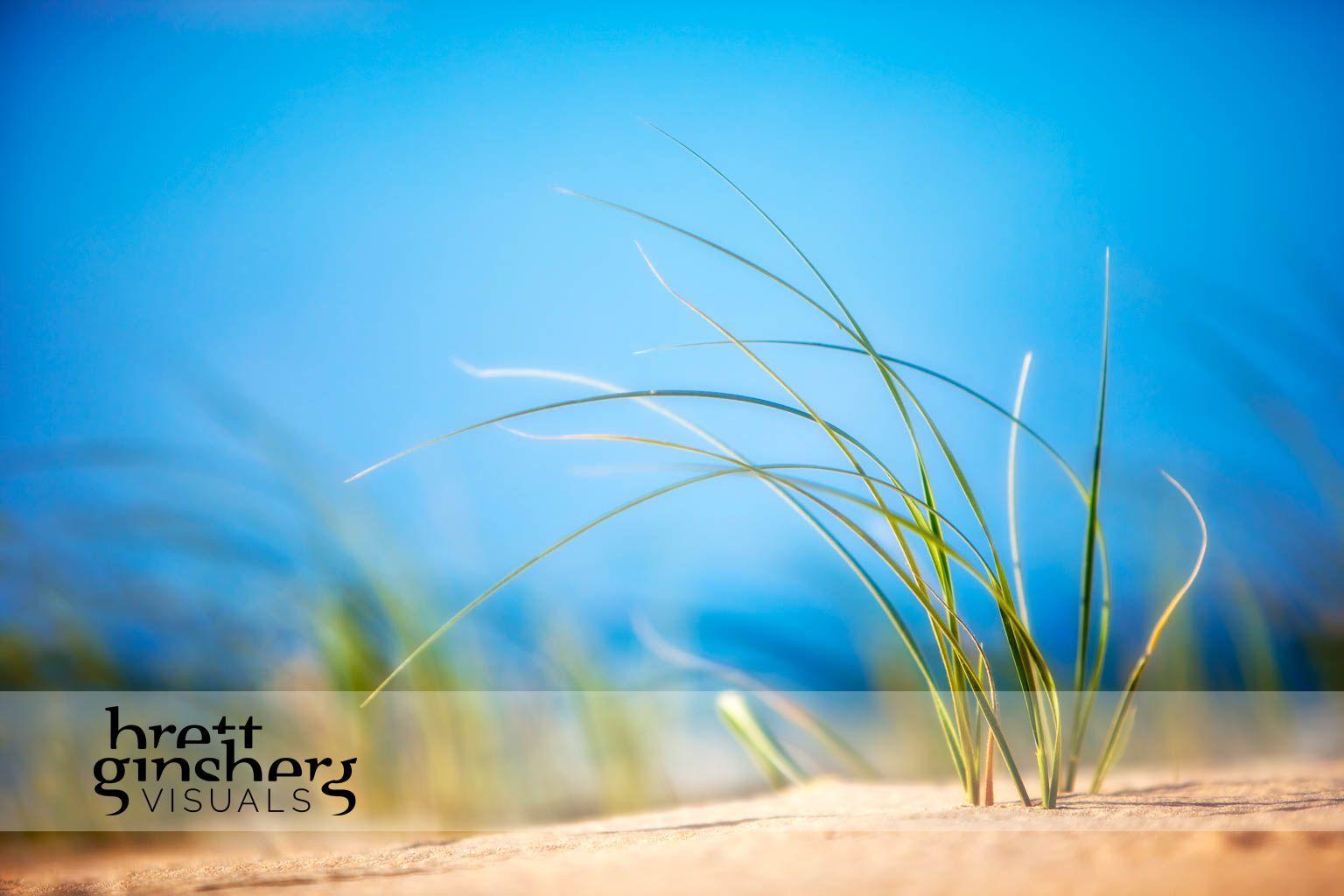 tuft of grass on beach
